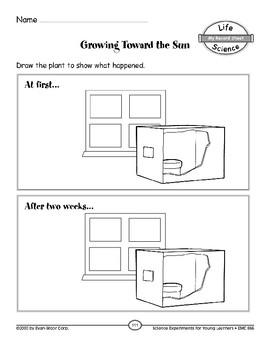 Growing Toward the Sun (Characteristics of Organisms)