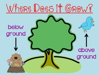 Growing Vegetables Powerpoint