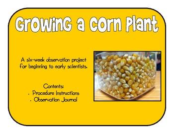 Growing a Corn Plant - Science Observation Unit