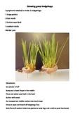 Growing a Grass Hedgehog