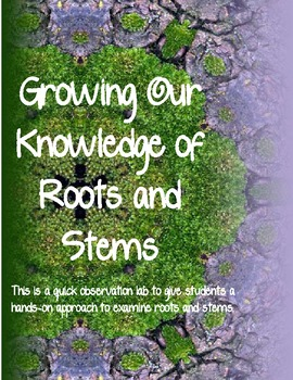 Growing our Knowledge of Roots and Stems