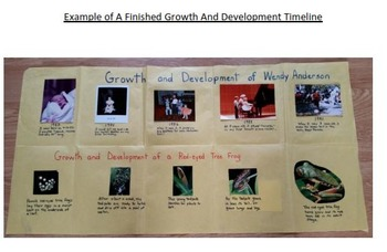 Growth And Development Timeline