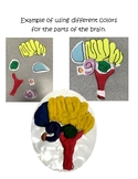 Growth Mindset - Parts of the Brain Activity