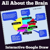 Growth Mindset Sample- Understanding the Brain Google Draw