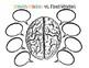 Growth Mindset vs. Fixed Mindset Brain Worksheet