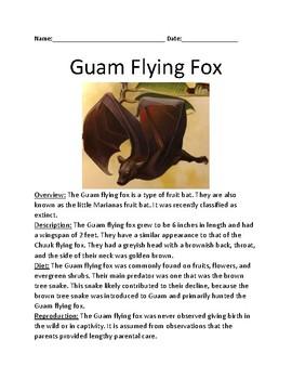 Guam flying fox - extinct bat - lesson article facts information questions