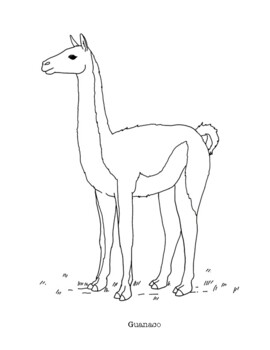 guanaco coloring page by mama draw it teachers pay teachers teachers pay teachers