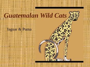 Guatemalan Wild Cats & Jaguar Masks