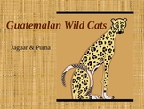 Guatemalan Wild Cats & Jaguar Masks