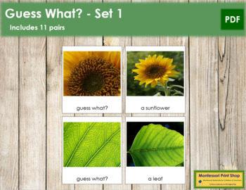 Guess What? - Set 1