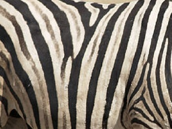 Guess that Safari Animal !