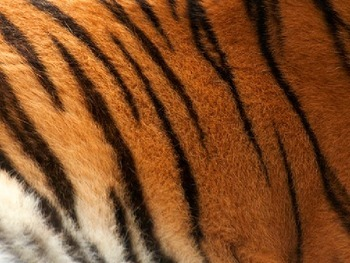 Guess the Animal (ENG and SPAN)