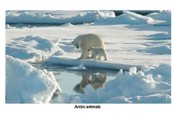 Guess what animal-arctic animals