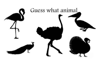Guess what animal-birds 2