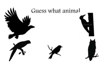 Guess what animal-birds