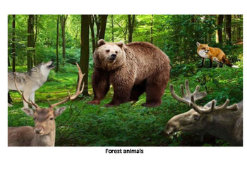 Guess what animal-forest 3