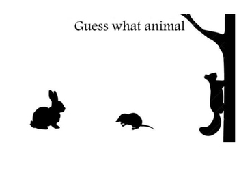 Guess what animal-forest 4