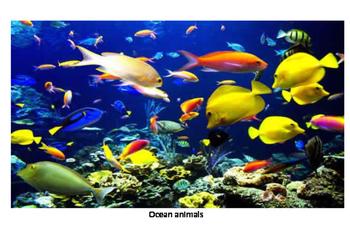 Guess what animal-ocean 2