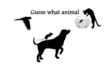 Guess what animal-pets