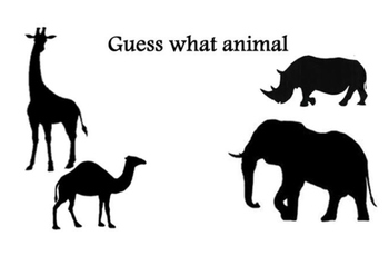 Guess what animal-zoo