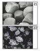 Microscope Image Guessing Game #1 - Scanning Electron Microscope Images - SEM