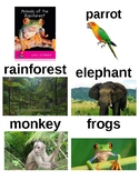 Guided Reading/Read Aloud Plan ANIMALS OF THE RAINFOREST Jo Windsor Level B