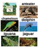 Guided Reading/Read Aloud Plan THE LIVING RAINFOREST AN ANIMAL ALPHABET Level Q