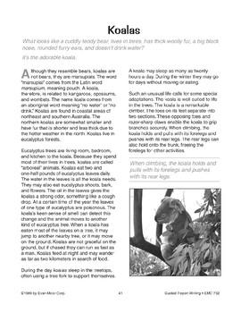 Guided Report Writing: Koalas