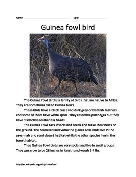 Guinea Fowl Bird - Informational Article Questions Vocabulary Facts