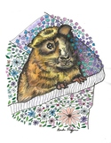 Guinea Pig Coloring Sheets