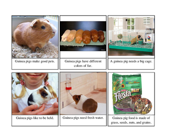 Guinea Pig Sentence and Picture Cards