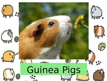 Guinea Pigs:  Interesting Facts and Pet Care Suggestions