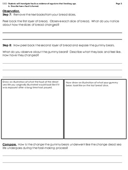 Gummy Bear Fossils Experiment and Graphic Organizer