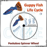 Fish, Guppy (Life Cycle Spinner)