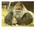 Guy the Gorilla London Zoo Word Search