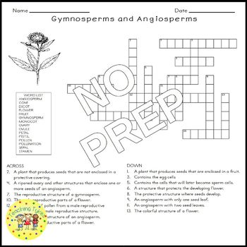 Gymnosperms Angiosperms Crossword Puzzle