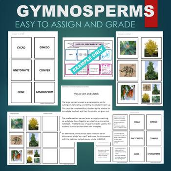 Gymnosperms (Cone, Ginkgo, Conifer, etc) Sort & Match Activity