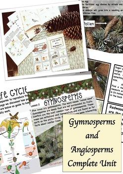 Gymnosperms and Angiosperms Homeschooling Unit