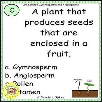 Gymnosperms and Angiosperms Task Cards