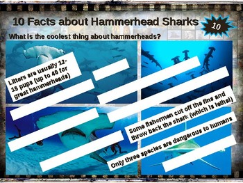 HAMMERHEAD SHARKS: 10 facts Fun, engaging PPT (w links & free graphic organizer)