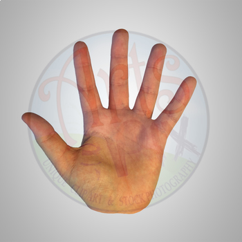 HANDS - Counting Fingers - Clipart Stock Photo - BUNDLE