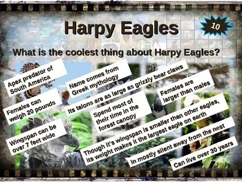 HARPY EAGLES: 10 facts. Fun, engaging PPT (w links & free graphic organizer)