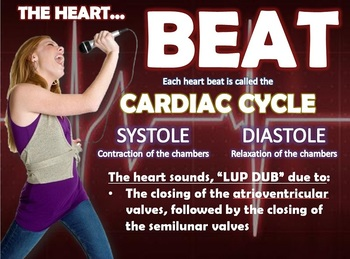 HEART: CARDIOVASCULAR SYSTEM POWERPOINT