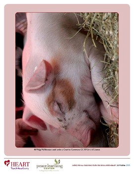 HEART Humane Education: What's Really Happening On The Farm? (Grades 3-5)