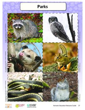 HEART (Humane Education): Lesson 5 - Urban Wildlife (Grades K-2)