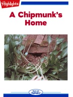 A Chipmunk's Home
