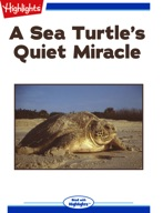 A Sea Turtle's Quiet Miracle