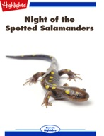 Night of the Spotted Salamanders