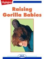 Raising Gorilla Babies