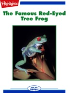 The Famous Red-Eyed Tree Frog